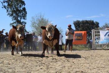 La mitad de los toros contaron con preofertas.