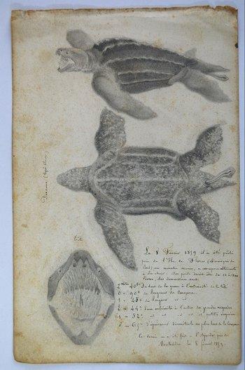 Tortuga de siete quillas, cuaderno de notas de  Diógenes Hequet