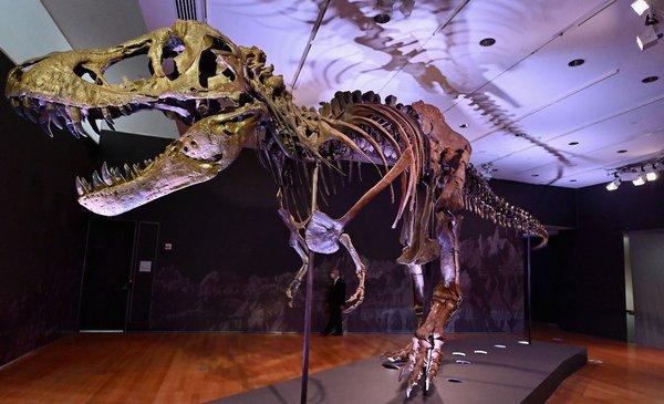 Un dinosaurio T-Rex a subasta en Nueva York podría alcanzar US$ 8 millones