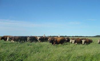 Los ganaderos siguen apostando a crecer: récord de verdeos y praderas