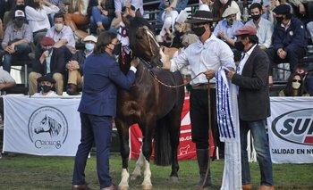 El presidente besa al Gran Campeón, lo observan Flavio Piegas (cabañero) y Diego de Brum (presidente de la gremial de criadores).
