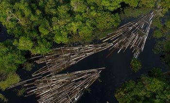 En 2019 y 2020, la deforestación amazónica fue de 10.700 km2 y 9.800 km2 respectivamente.