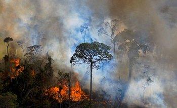 Brasil es responsable de un 55,6% del total de cobertura arbórea perdida en 32 Estados de la región entre 2010 y 2019.