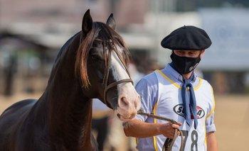 Imagen El mejor caballo Criollo del mundo es uruguayo, de Paysandú