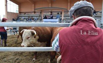 Con Valdez, en Florida, máximo de US$ 4.800 por toros de La Elisa