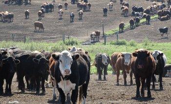 El mercado ganadero sigue firme.