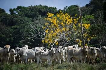 """Se trata de casos """"atípicos"""", dejó en claro el gobierno brasileño"""