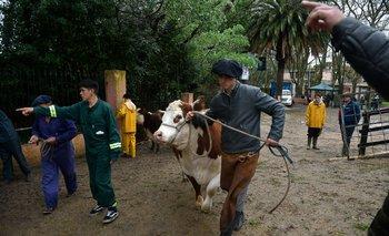 Los últimos ajustes en el predio de la Rural del Prado a horas del inicio de la Expo Prado
