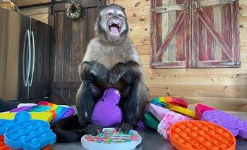 El mono con el juguete