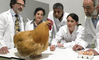 No es la primera vez que los científicos tratan de establecer la fórmula del huevo