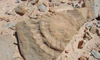 fósil de un pterosaurio encontrado por un grupo de científicos en el desierto de Atacama.