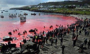 La caza de ballenas (foto) y de delfines es legal en las Islas Feroe. (Imagen de archivo)