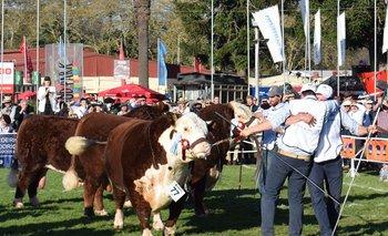 La cabaña La Hormiga, de Tacuarembó, ganó el Gran Campeón Polled Hereford y el Campeón Supremo.