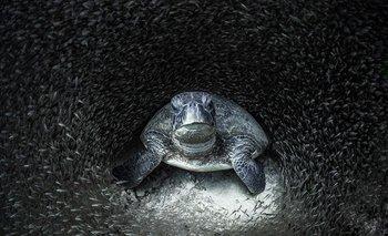Ocean Photography Awards