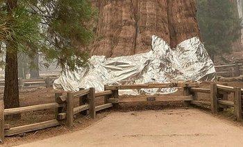 La base de General Sherman y de otras secuoyas gigantes fueron cubiertas por los bomberos en mantas de aluminio