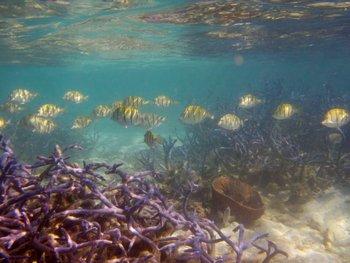 Banco de peces se mueve por un arrecife de coral