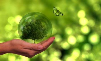 Bases, condiciones y guía para la postulación de emprendimientos e intraemprendimientos del premio EmprendO Sustentable de El Observador