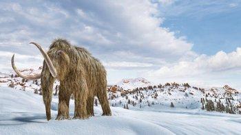 Los mamuts lanudos se extinguieron hace milenios, pero la ingeniería genética podría traerlos de vuelta a la Tierra