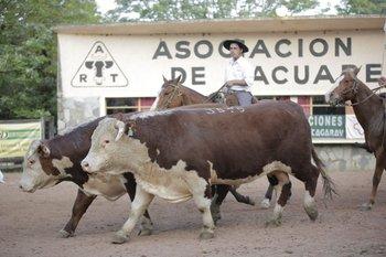 Santander y Los Cerros de San Juan realizaron su 106° remate anual