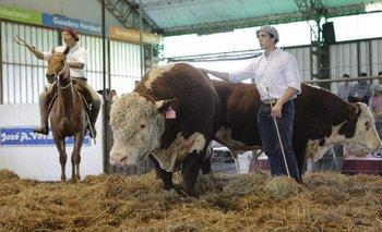 Animales destacados de reconocidas cabañas habrá en Tacuarembó