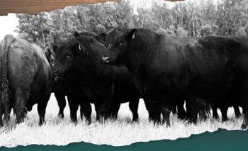Máximo de US$ 5.040 por un toro plantelero que remató Indarte Negocios Rurales