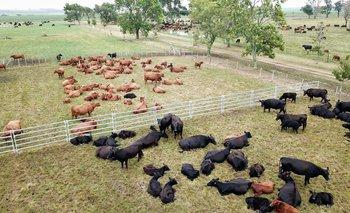 Imagen El USDA le puso números al crecimiento esperado en la agroindustria cárnica uruguaya