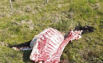 Imagen A 6 kms de Pando, le carnean una vaca por mes
