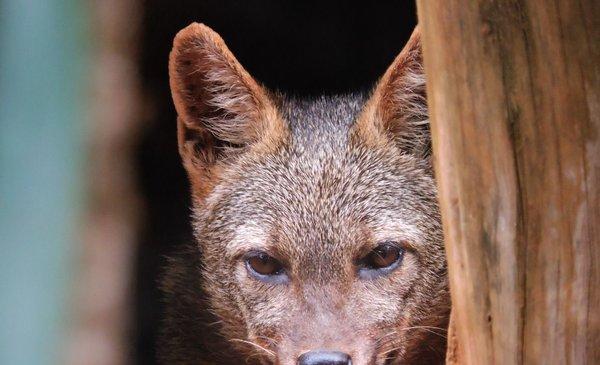 ¿Cuáles son las especies más atropelladas en Uruguay?