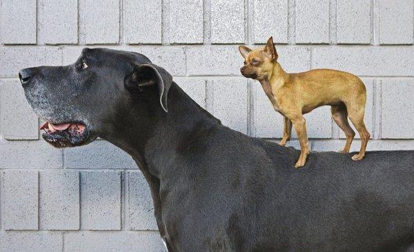 """Los perros son nuestro """"mejor amigo"""" y ahora sabemos que también el más antiguo (pero es un misterio cómo surgió esa amistad)"""