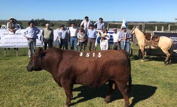 Buenas ventas de toros Angus y Hereford mochos.