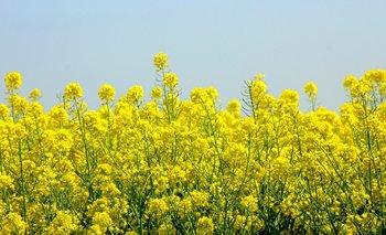 Se viene un Uruguay cada vez más amarillo