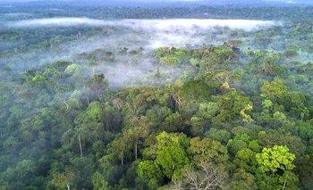 La selva amazónica es el hogar de una de cada 10 especies conocidas en la Tierra.