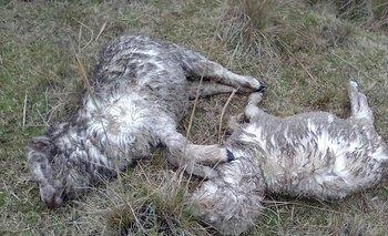 En el establecimiento han sucedido varios ataques de perros y casos de abigeato este año.
