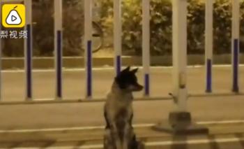 El servicio Pear Video dijo que el perro ha permanecido allí desde el 21 de agosto