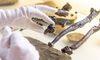 Los investigadores hallaron huesos de cuatro fósiles: un macho y dos hembras adultos, y un juvenil.