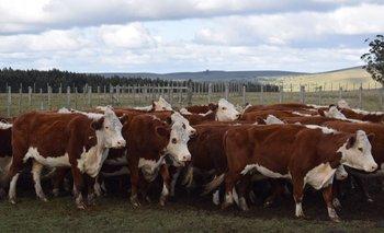 Imagen El clima castiga al ganadero: muchos se ven obligados a vender cuando los precios bajan