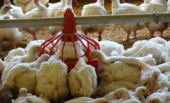 En general, se transmite por un contacto muy cercano con animales infectados, aves de corral o patos
