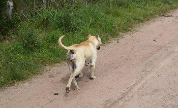 En Uruguay hay cerca de dos millones de perros y no todos tienen un dueño responsable.