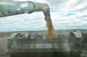 La soja es un componente clave para el ingreso de dólares en Argentina.