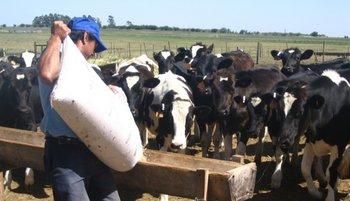 El sector de la lechería necesita también soluciones adecuadas de viviendas