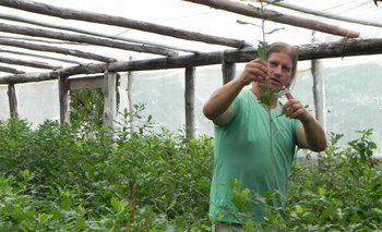 Luis López en uno de los invernáculos con plantines de roble