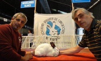 Gustavo Zícari, la coneja de los $ 100.000, y Nelson Pera