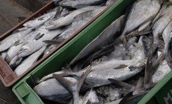 Indicadores positivos en el sector pesquero