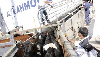 La venta implica a terneras que deberán pesar más de 200 kilos.