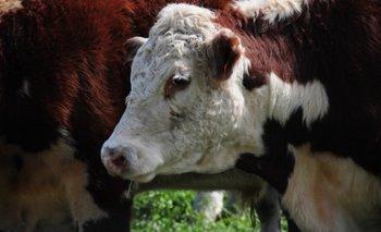 El crecimiento de los costos ganaderos llegó hasta un 101% en dos años en Santa Fe, Argentina