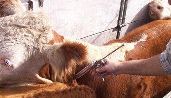 Procuran organizar las actividades de las comisiones departamentales de sanidad animal