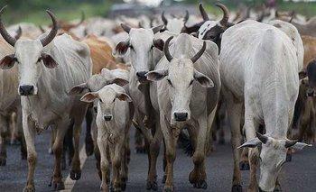 Problemas para la agroindustria ganadera de Brasil.