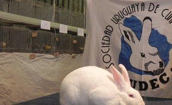 El mejor de todos los conejos, de cabaña El Porvenir