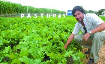 Martín Álvarez, de PGG Wrightson Seeds, en una parcela de Brassica