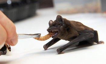 Los animales exóticos son una vía de contagio de enfermedades infecciosas